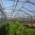 Gardening and Irrigation Sprinklers
